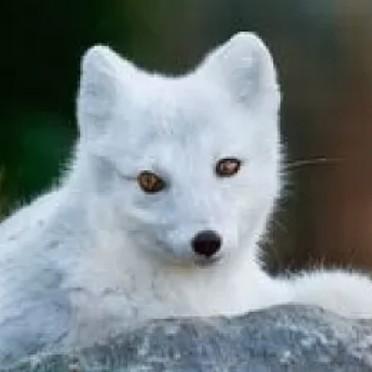 雪中银狐的个人空间