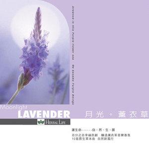 《紫的触键》一首美得让人心碎的曲子