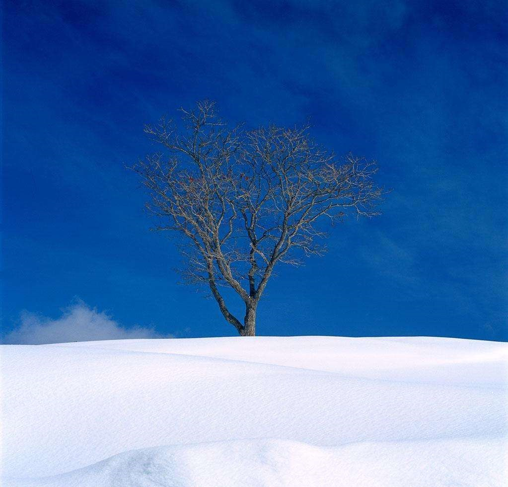 蓝色降落伞——『忧伤歌声』钢琴谱