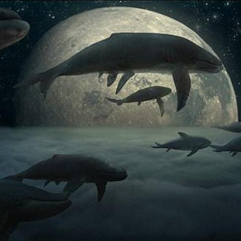 大鱼【C调】动画电影《大鱼海棠》印象曲