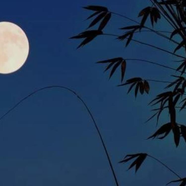 月光下的凤尾竹钢琴谱