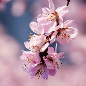 春之风格曲第一乐章(自编)钢琴谱