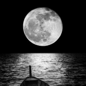 《白月光与朱砂痣》精简独奏版