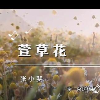 你好李焕英主题曲 萱草花 最动听版本 -附歌词