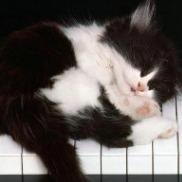 钢琴上的美妙旋律的钢琴谱