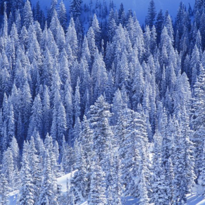 初雪【The First Snowflakes】班得瑞钢琴谱