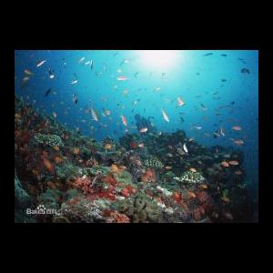 海底- 钢琴简单版-抖音热歌钢琴谱