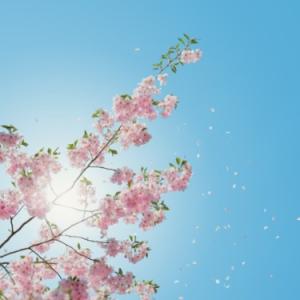 夏に花が散る 羽肿钢琴谱